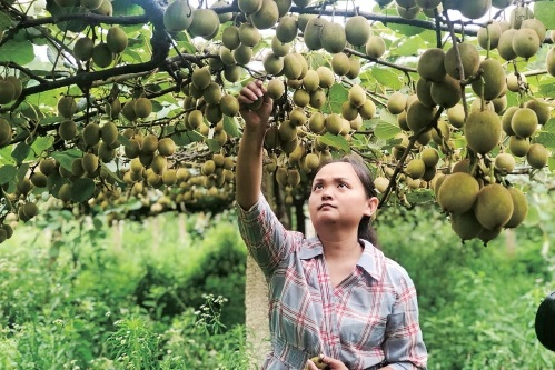 当全球农业遇上青年人