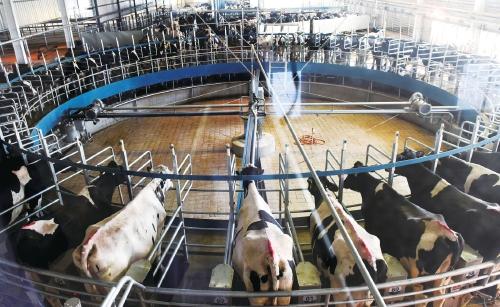 乳业产业集聚区 观光牧场好去处