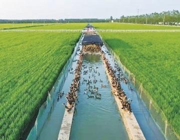 安徽农垦:融入长三角 开启新发展