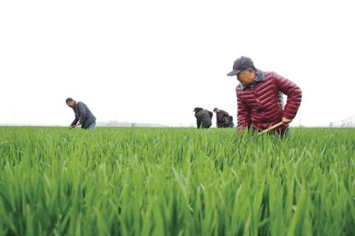 为乡村振兴释放农田活力