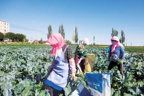生态农业绿了戈壁富了村民